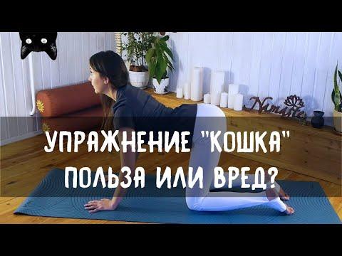 йога поза кошки